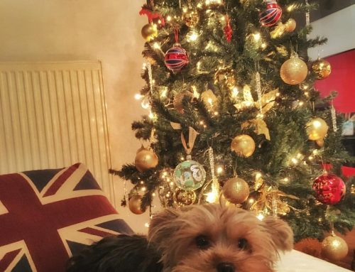 Christmas junkies…ενωθείτε!!!